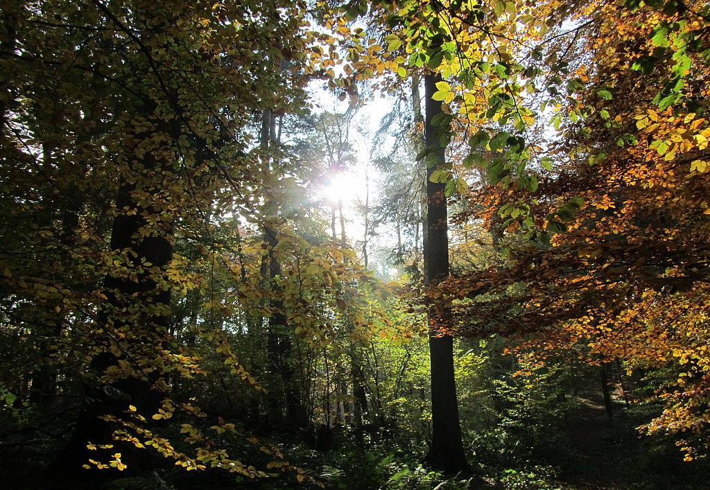 Bunt sind schon die Wälder