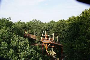 Baumkronenpfad Ivenacker Eichen Foto: Landesforst